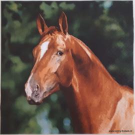 6377 Paard