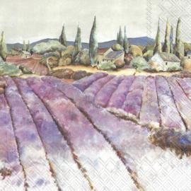 7157 Lavendel veld