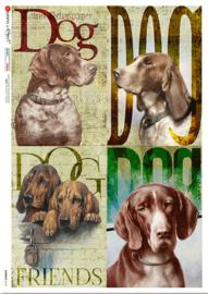 ANI-0141  Dog