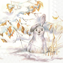 6392 Peter, the white rabbit