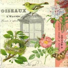 7093 Oiseaux