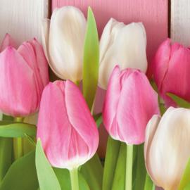6884 Tulpen