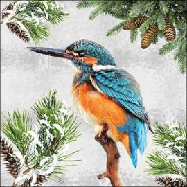 7287 IJsvogel in de sneeuw