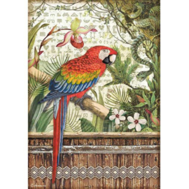 DFSA4531  Amazonia Parrot