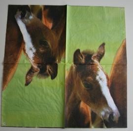 3786 Paard