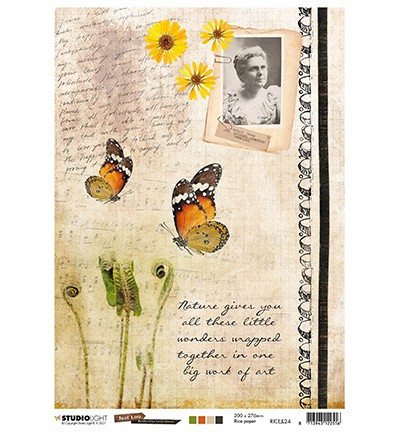 SLJL24 Butterfly collection