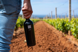 Nieuw! Cantina Mesa de trotse wijn van Sardinie