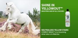Shine in Yellowout 473 ml