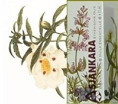 Zonneroosje Wilde roos Cistus ladaniferus 2,5ml