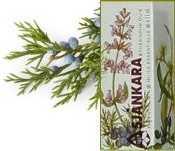 Jeneverbes Juniperus communis Centraal Europa 11ml