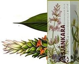 Curcuma Longa Geelwortel 11ml
