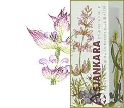 Echte Salie-Salvia Officinalis 11ml