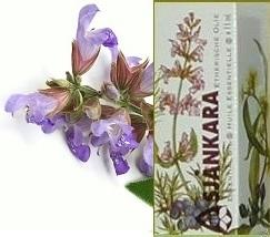 Salie (Echte) Salvia officinalis 11ml