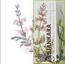 Lavendel-Spijk Lavendula 11ml