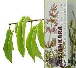 Sandel, Westindisch Amyris balsamifera 11ml