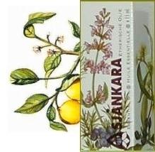 Petitgrain Sinaasappelblad Citrus aurantium ssp amara 11ml