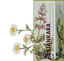 Roomse kamille Anthemis nobilis 2,5ml
