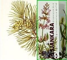 Den/Spar Bergden Pinus mugho pumiliones 11ml