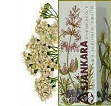 Duizendblad Achillea millefolium 2,5ml