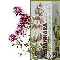 Wilde tijm Thymus serpyllum 11ml
