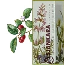 Wintergreen Gaultheria procumbens 11ml