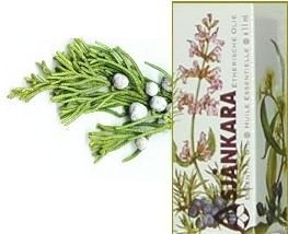 Virginische Ceder-Juniperus Virginiana 11ml