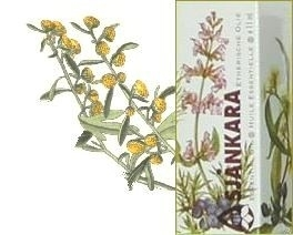 Davana Artemisia pallens 5ml