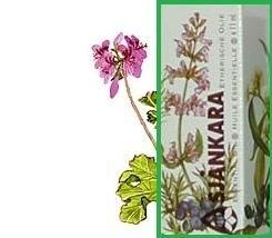 Geranium pelargonium egypte 11ml
