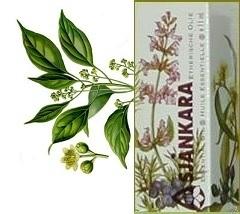Kamfer Cinnamomum camphora var. Formosanum 11ml
