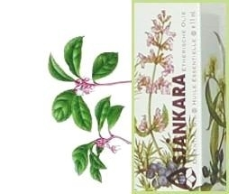 Wintergreen Gailtheria procumbens 11ml