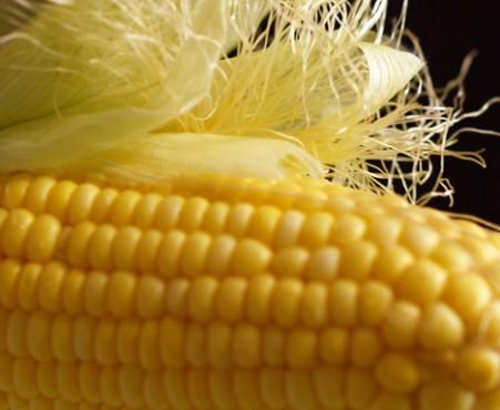 cornsilk.jpg