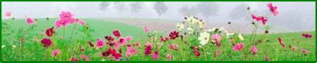 flowerfieldjpg.jpg