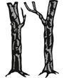 CR1338 Tiny's Trees Oak