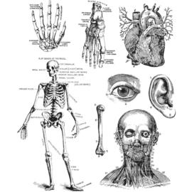 "CMS 378 Tim Holtz Cling Stamps Cadaverous 7""X8.5"""