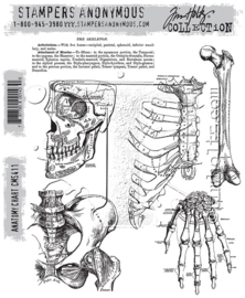 "CMS 411 Tim Holtz Cling Stamps Anatomy Chart 7""X8.5"""