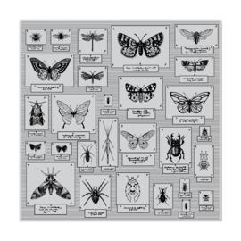 "605561 Hero Arts Background Cling Stamp Bug Collection Bold Prints 6""X6"""