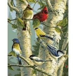 "352772 Paint By Number Kit  Song Birds 16""X20"""