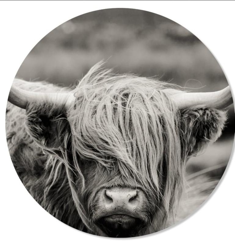 muurcirkel cow black&white  50 cm