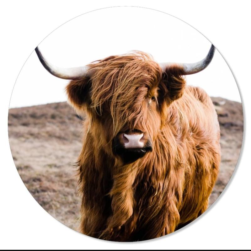 muurcirkel cow 30 cm