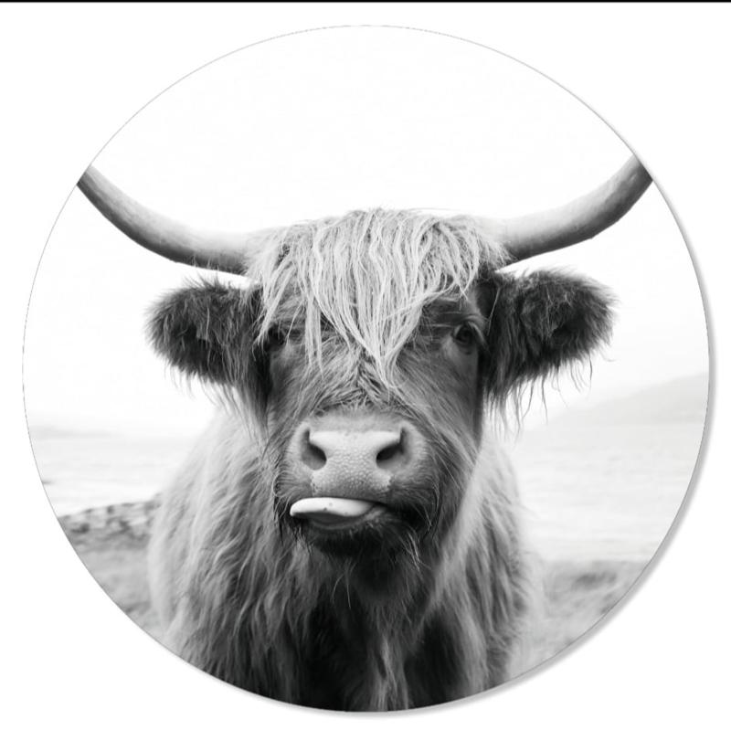 muurcirkel happy cow 70 cm