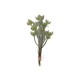 Bl-04.9a: Vetplant /licht grijsgroen