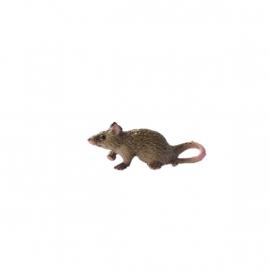 Dd-174 Rat