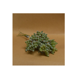 Bl-04.9e: Vetplant / grijsgroen