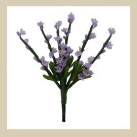 Bl-01.06: Lavendel