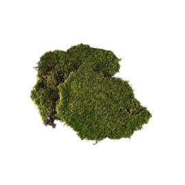 Ms-12.2: Mos groen / naturel