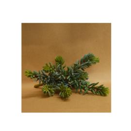 Bl-04.9b: Mini Succulenten / Vetplant