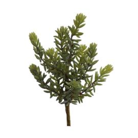 Bl-04.9b: Vetplant / grijsgroen