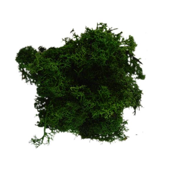 Ms-10.1: Rendier mos: Groen (15 gr.)