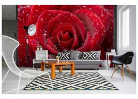 Fotobehang Rode roos