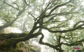 Komar The Forgotten Forest PSH092-VD4